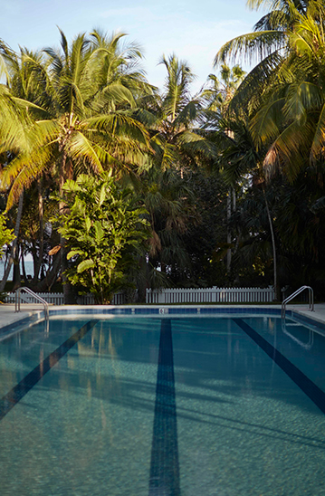 a swimming pool surrounded by palm trees